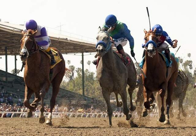 best parlay bets this week kentucky derby free picks